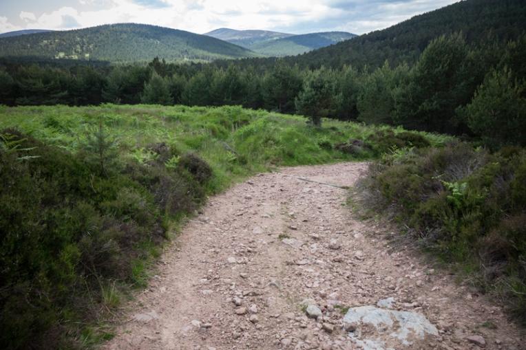 Path (3)