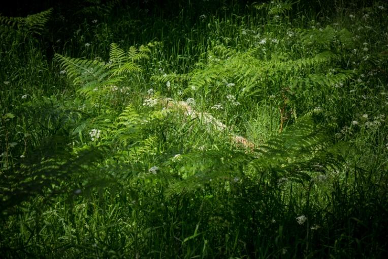 Undergrowth (1)