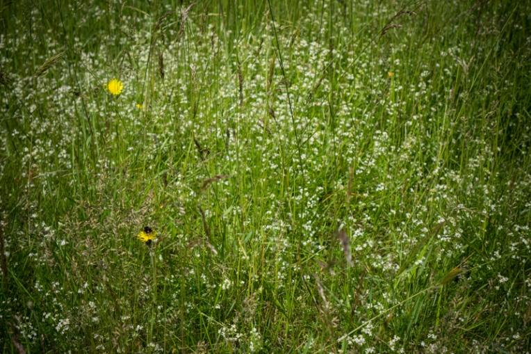 Undergrowth (2)