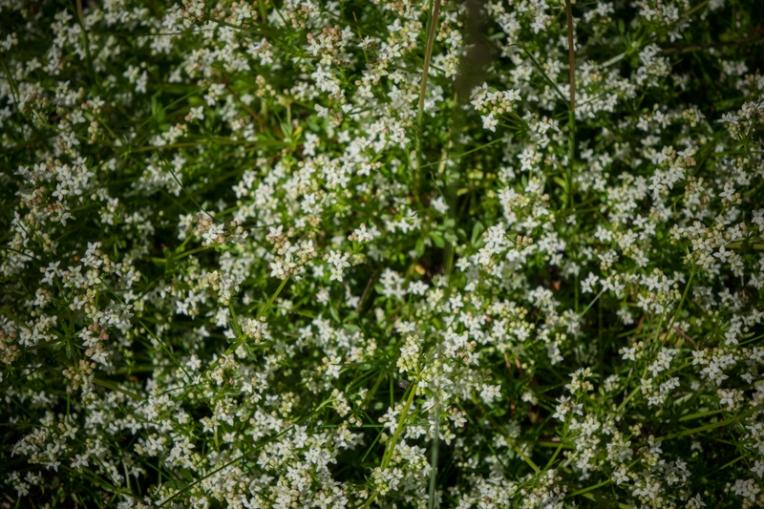 Undergrowth (3)