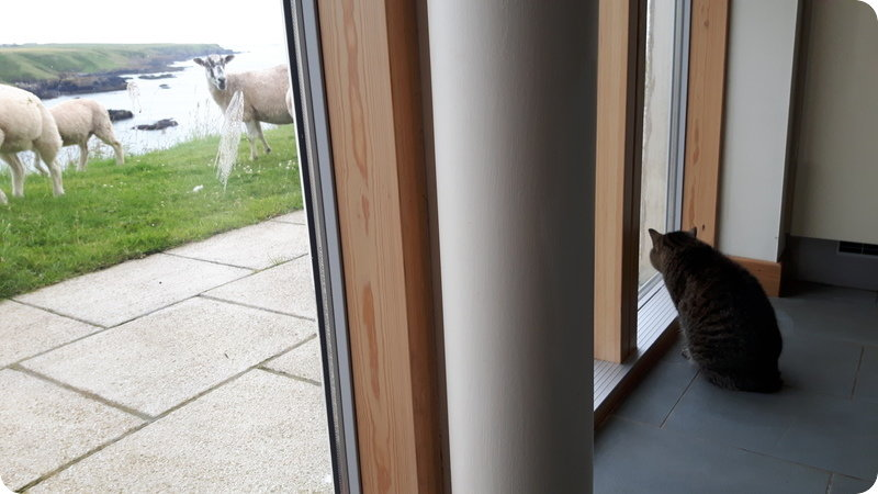 Suri meeting her new neighbours