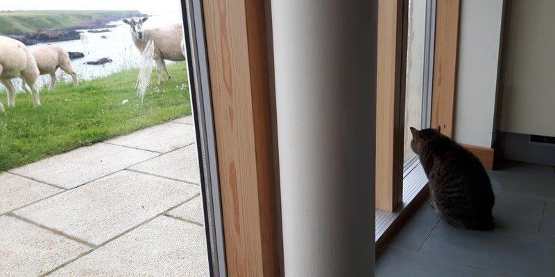 Suri meeting her new neighbours