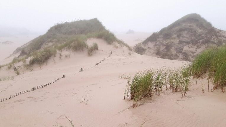 Balmedie sand dunes, Aberdeenshire